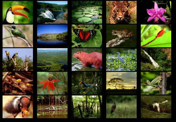 amazon rainforest plants collage. the amazon rainforest is home to many different types and species of amazing animals these include plants collage x